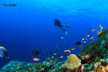 scuba diving batam